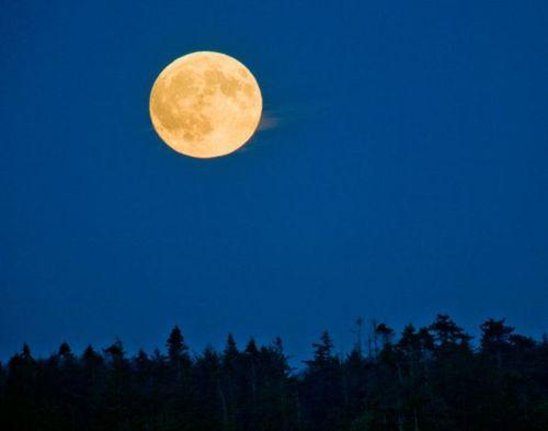 Moon Light, Yellow