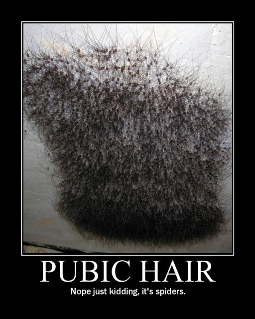 pubic-hair-spiders