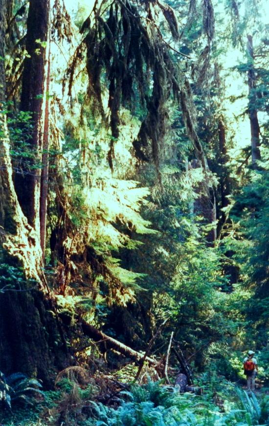 16A - Ho Rain Forest, Olympic Nat Park, WA ST - 1995